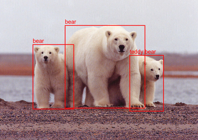 Bears Labeled